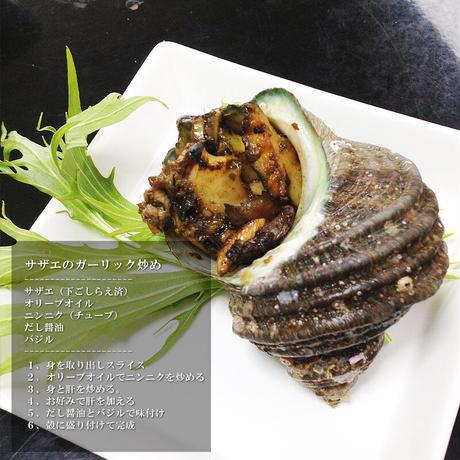 天然活きサザエ 2kg 12〜20個  大分県産 蠑螺 さざえ 栄螺