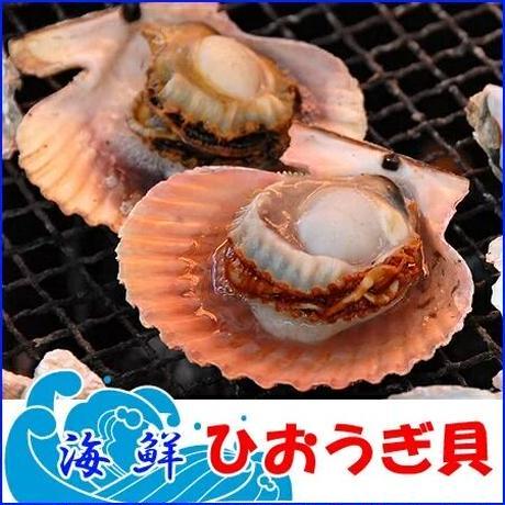 活きヒオウギ貝 10枚 大分県産 市場直送 ひおうぎ貝 緋扇貝 冷蔵
