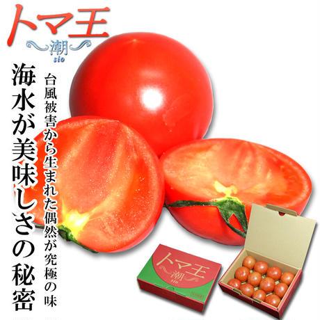 トマ王 潮 約1kg 大分県 日出町 真那井 フルーツトマト 塩トマト