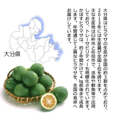 かぼすヒラマサ 一本物 3.5-4kg 丸/2枚/3枚 大分県産 養殖 鮮魚 カボス ひらまさ フルーツ魚