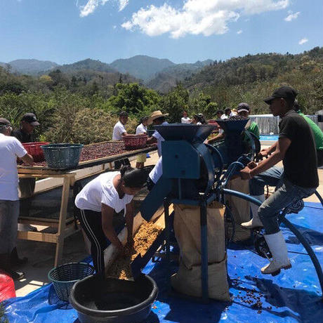 [DARK ROAST]GUATEMALA-GCF PACHE DRY WASHED  200g