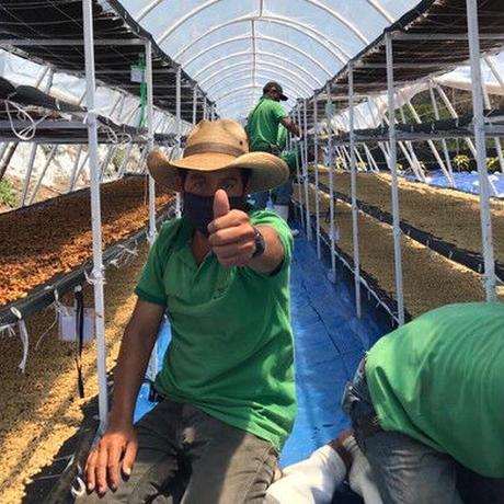[DARK ROAST]GUATEMALA-GCF PACHE DRY WASHED  100g