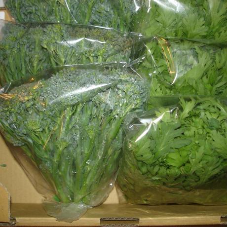 春菊とステックセニョールのセット野菜(6袋分)