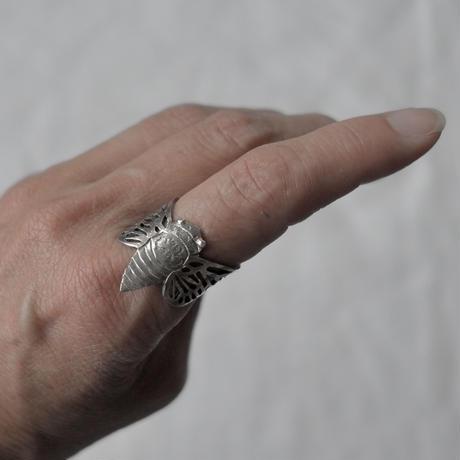 天野ミサ セミのリング