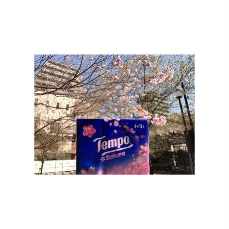 【香港☆Tempo】 桜・SAKURA☆香り付き 36pcs / 1パック