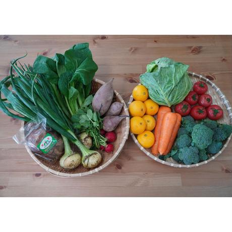 【お試し】季節の安心野菜せっと Sサイズセット「サルーテ」  ※送料・税込 クール便無料