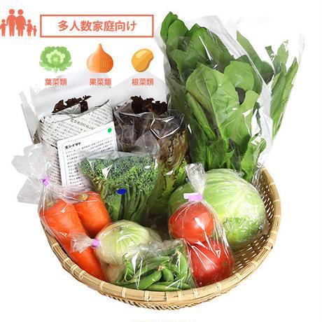 【お試し】季節の安心野菜せっと Lサイズセット「グランデ」 ※送料・税込 クール便無料