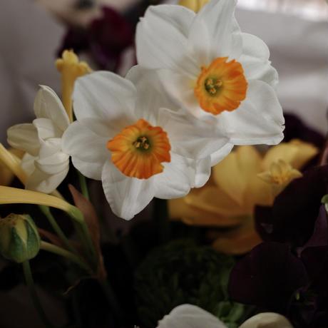 おまかせセレクト お花のお届け便