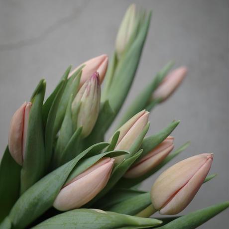 お花のお届け便 Tulips bouquet