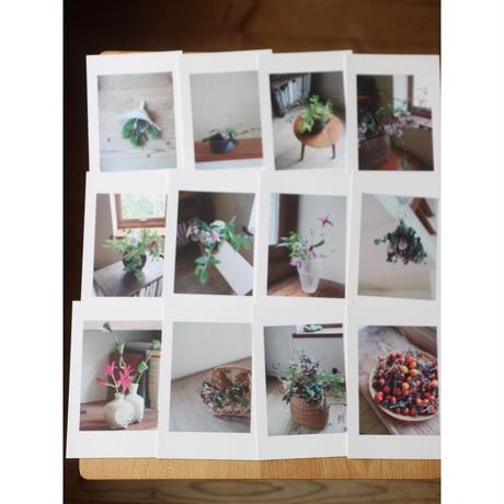 花のポストカード12枚組
