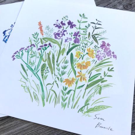 ポストカード ガーデン 2枚セット(カラー&ブルー)