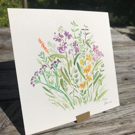 ポストカード ガーデン カラー