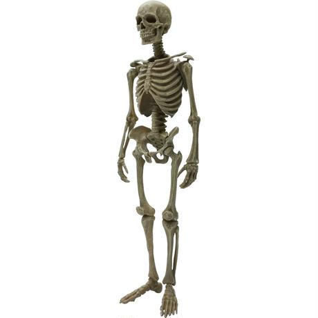 【予約受付終了】【4個入りパック】博物モデリング俱楽部・壱 1/12ヒト骨格《予約:2021年11月中旬発送予定》