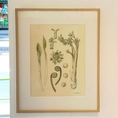 河井いづみ「春」  izumi kawai  原画