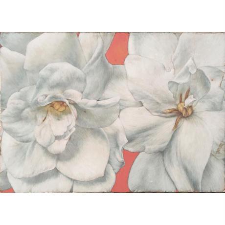 深谷良一「白い花 クチナシ」