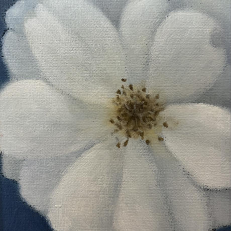 PLANTS OF PLANET 民野宏之「薔薇(Rose)白」