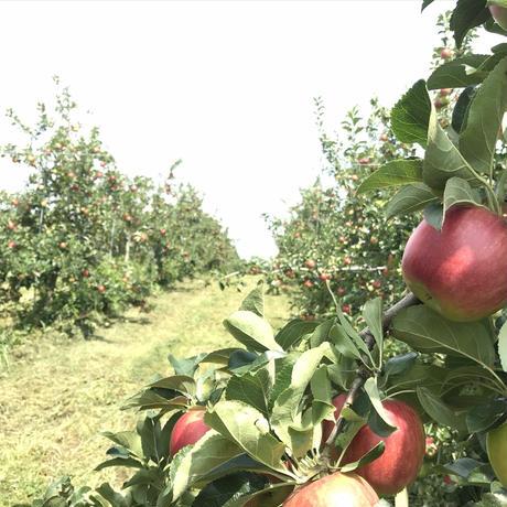 蜜入り 葉とらずサンふじりんご 贈答用 10kg 30玉前後