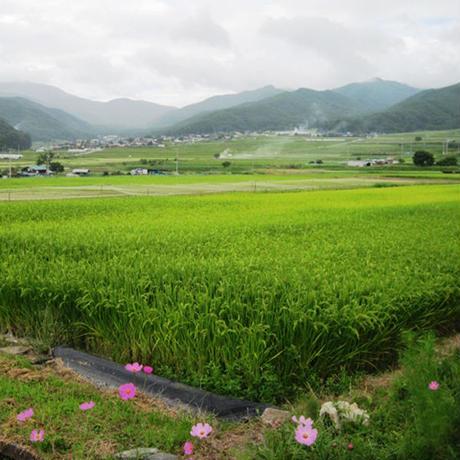 新米02  魚沼産コシヒカリ 5kg [うおぬま美人玄米] 玄米雑穀米シリーズ