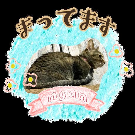 a013*LINEスタンプ・ザックリ切り抜き【ナチュラル】画像8枚-ペット  のコピー