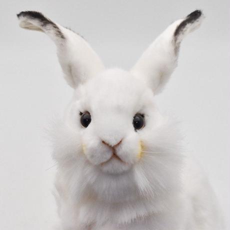 HANSA ハンサ シロウサギ 3313 リアル ぬいぐるみ