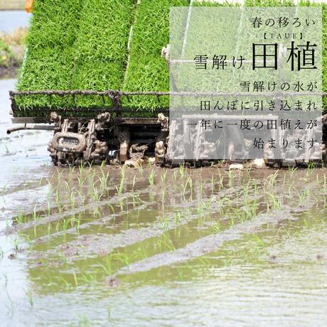 新米令和3年新潟県産コシヒカリ白米10kg (5kg ×2個パック)
