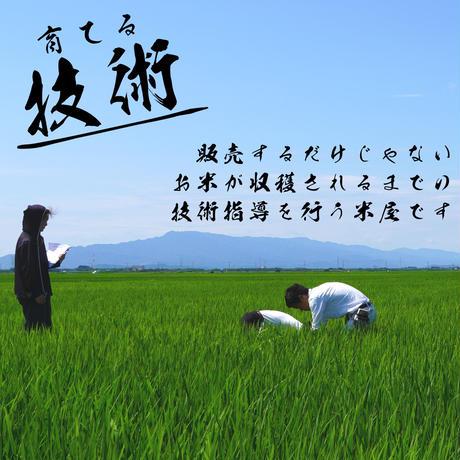 新米令和3年新潟県産コシヒカリ白米6kg (2kg ×3個パック)