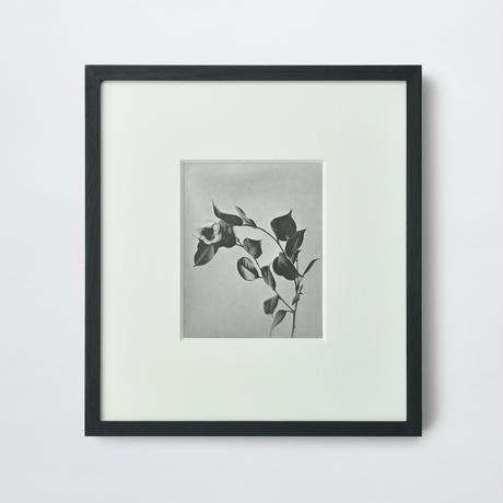PAPIER LABO.〈COLLOTYPE PHOTOGRAPH CARD_志賀理江子〉