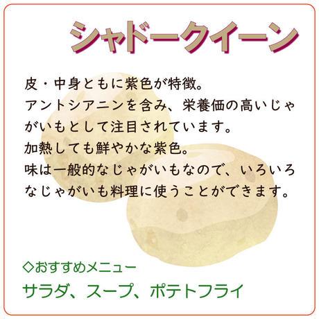 【北海道産】 じゃがいも 「シャドークイーン」 約3kg