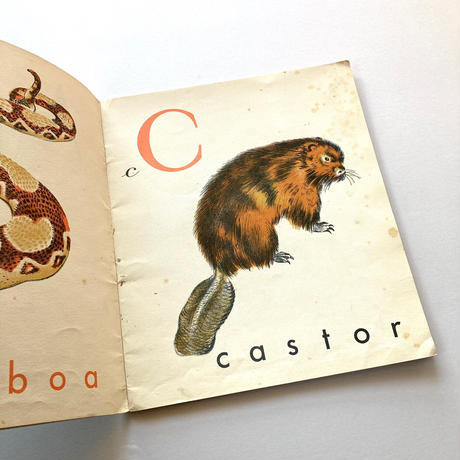 ABC du Pere Castore