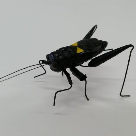昆虫模型:コオロギ