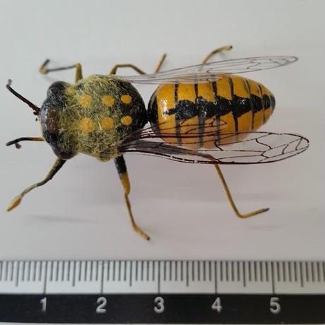昆虫模型:蜂