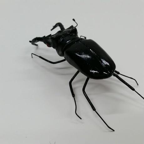 昆虫模型:クワガタ