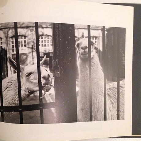 GARRY WINOGRAND|The Animals