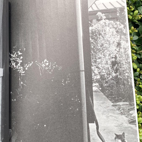 北村太郎 |空とぶ猫