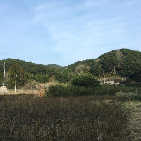 高知・黒潮町の視界すっきり花はぶ茶/ リーフ80g 大袋
