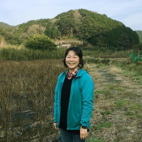高知・黒潮町の視界すっきり花はぶ茶/ティーバック 50個 大袋