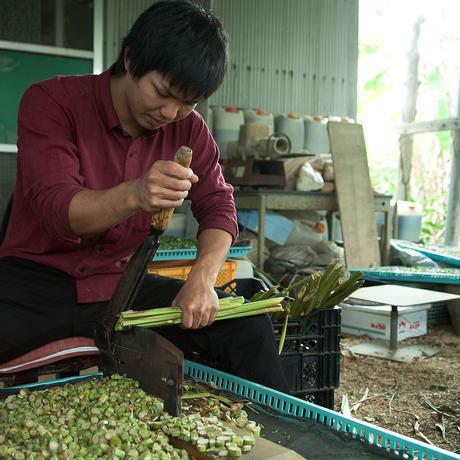 石垣島の香り華やか月桃茶/ティーバック 50個 大袋