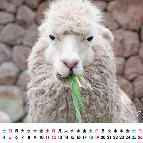 卓上カレンダー(動物バージョン)