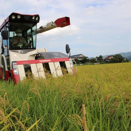 売り切れ! 令和2年産 農薬不使用米コシヒカリ 玄米 5kg