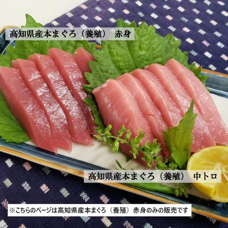 高知県産本まぐろ(養殖)  赤身 300g