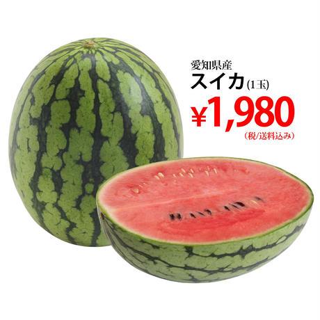 【単発注文】愛知県産スイカ1玉[Lサイズ以上](税/送料込み)※安城市在住者限定
