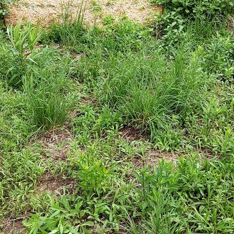 竹チップ除草用 1立米(こちらの商品は1度お問い合わせください)
