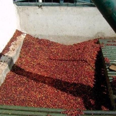 <<コーヒー豆 通販>> 注文の手間なし&断然お得な 珈琲豆定期便 グァテマラ 中深煎り(豆) 250g×2