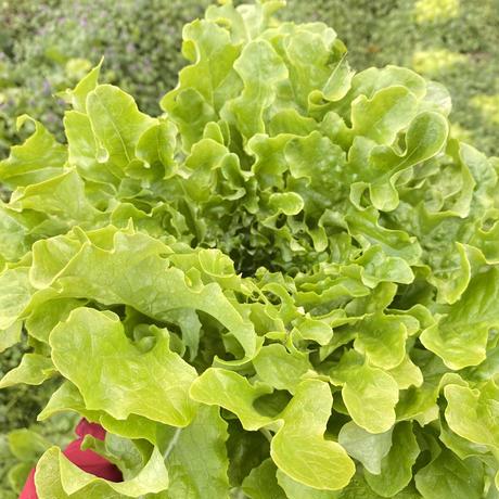 玉名牧場のお野菜おまかせセット