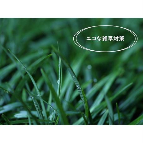 タマリュウマット150枚 石井の玉竜 グランドカバー     (一部地域 送料無料)