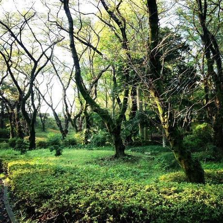 【ワークショップ】森へ素材集めコース
