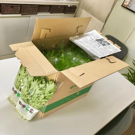 採りごろ葉菜セット30パック