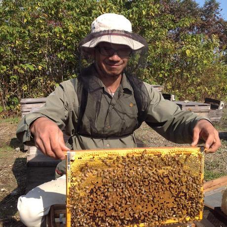 川村養蜂場 鈴鹿山脈 椿の森のはちみつ