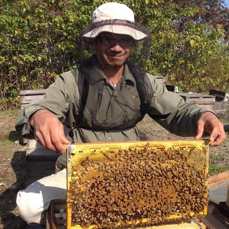 川村養蜂場 くろがねもちはちみつ