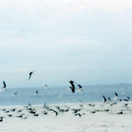 NJ Birds